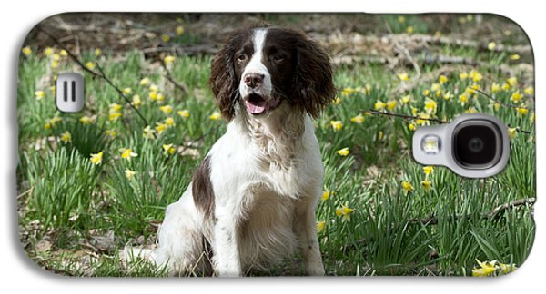 Garden Scene Galaxy S4 Cases - English Springer Spaniel Galaxy S4 Case by John Daniels