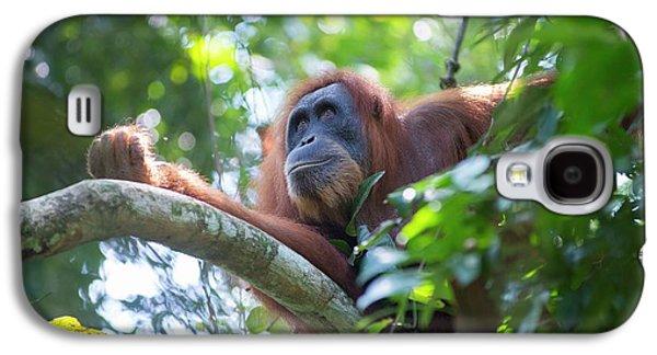 Sumatran Orangutan Galaxy S4 Case by Scubazoo