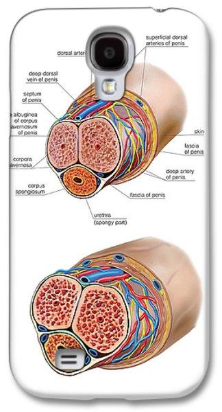 Male Genital System Galaxy S4 Case by Asklepios Medical Atlas