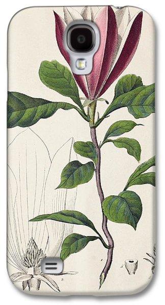 1847 Magnolia Primitive Flower Bracts Galaxy S4 Case by Paul D Stewart