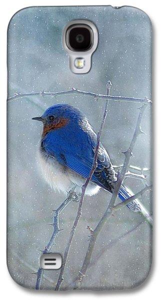 Cards Galaxy S4 Cases - Blue Bird  Galaxy S4 Case by Fran J Scott