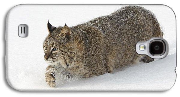 Lynx Rufus Galaxy S4 Cases - Bobcat Galaxy S4 Case by John Shaw