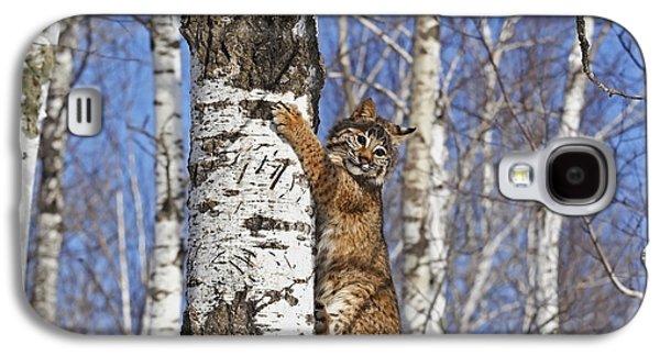 Lynx Rufus Galaxy S4 Cases - Bobcat Galaxy S4 Case by Linda Freshwaters Arndt
