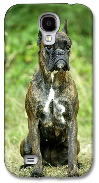Boxer Galaxy S4 Cases - Boxer Dog Galaxy S4 Case by Jean-Michel Labat