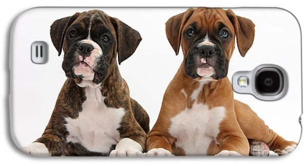 Boxer Puppy Galaxy S4 Cases - Boxer Puppies Galaxy S4 Case by Mark Taylor