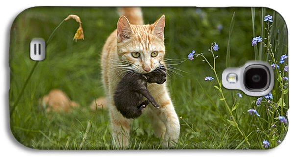 Cat Carrying Kitten Galaxy S4 Case by Jean-Michel Labat