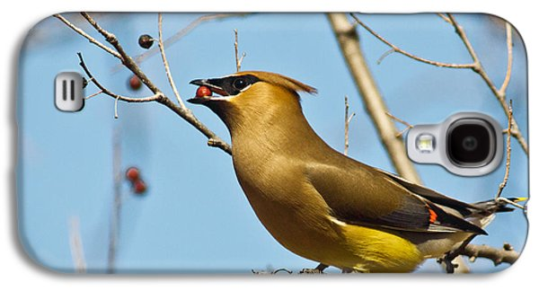 Cedar Waxwing With Berry Galaxy S4 Case by Robert Frederick