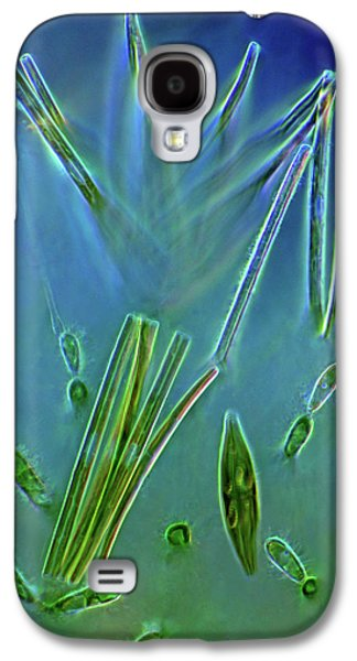 Diatoms And Red Algae Galaxy S4 Case by Marek Mis