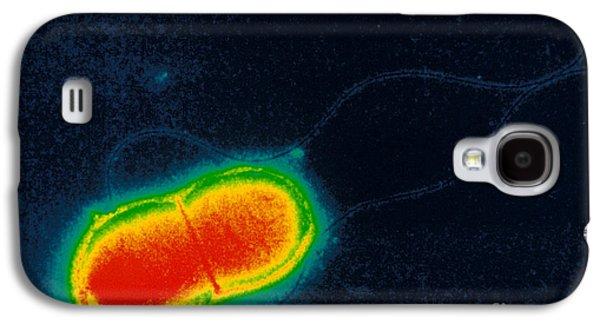 Tem Galaxy S4 Cases - Escherichia Coli Galaxy S4 Case by Scott Camazine