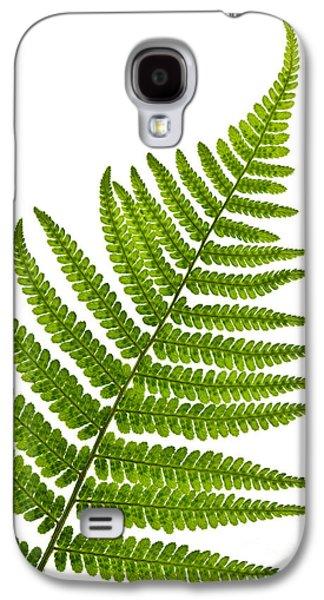 Botanical Galaxy S4 Cases - Fern leaf Galaxy S4 Case by Elena Elisseeva