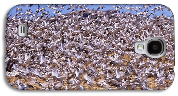 Wildlife Refuge. Galaxy S4 Cases - Flock Of Snow Geese Flying, Bosque Del Galaxy S4 Case by Panoramic Images