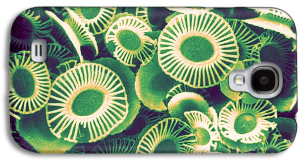 Calcareous Phytoplankton Galaxy S4 Cases - Fossilized Coccoliths, Emiliania Galaxy S4 Case by Biophoto Associates