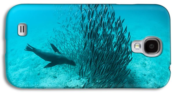 Galapagos Sea Lion Hunting Fish Rabida Galaxy S4 Case by Tui De Roy