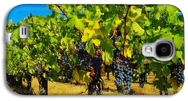 Pastoral Vineyards Galaxy S4 Cases - Grapes On The Vine Galaxy S4 Case by Jeff  Swan