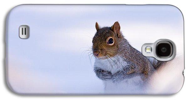 Grey Squirrel In Snow Galaxy S4 Case by Jeff Sinon