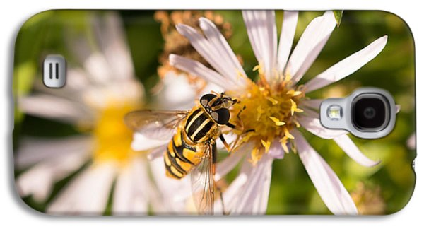 Flowers Galaxy S4 Cases - Hoverfly Galaxy S4 Case by Robert Carr