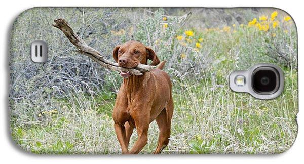 Dog Retrieving Galaxy S4 Cases - Hungarian Vizsla Retrieving A Stick Galaxy S4 Case by William H. Mullins