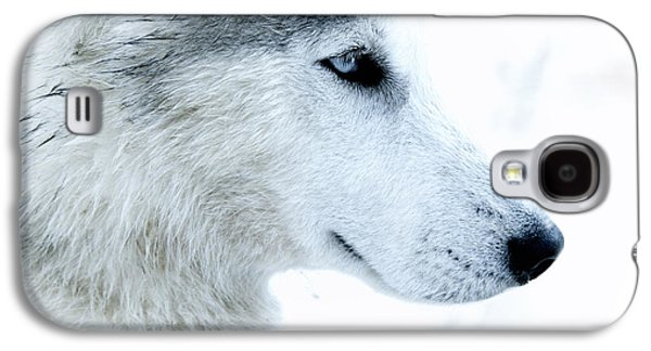 Husky Galaxy S4 Cases - Husky Galaxy S4 Case by Stylianos Kleanthous