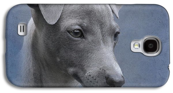 Puppies Galaxy S4 Cases - Italian Greyhound Puppy Galaxy S4 Case by Angie Vogel