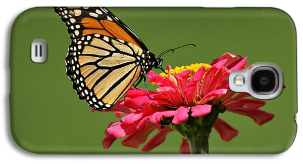 Indiana Flowers Galaxy S4 Cases - Monarch Butterfly Galaxy S4 Case by Sandy Keeton