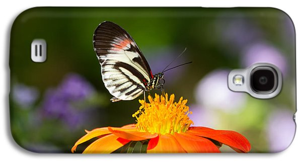 Kim Photographs Galaxy S4 Cases - Piano Key Butterfly Galaxy S4 Case by Kim Hojnacki