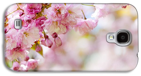 Cherry Blossoms Photographs Galaxy S4 Cases - Pink cherry blossoms  Galaxy S4 Case by Elena Elisseeva