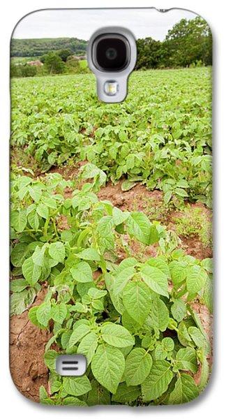 Potatoes Growing At Washingpool Farm Galaxy S4 Case by Ashley Cooper