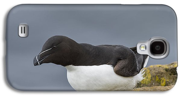 Razorbill Galaxy S4 Case by John Shaw