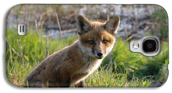 Fox Kit Galaxy S4 Cases - Red Fox Kit Galaxy S4 Case by Olivier Le Queinec
