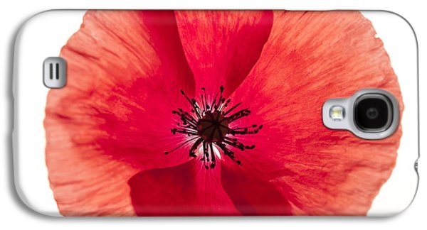 Studio Photographs Galaxy S4 Cases - Red poppy flower Galaxy S4 Case by Elena Elisseeva