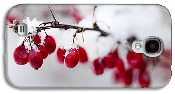 Berries Galaxy S4 Cases - Red winter berries under snow Galaxy S4 Case by Elena Elisseeva