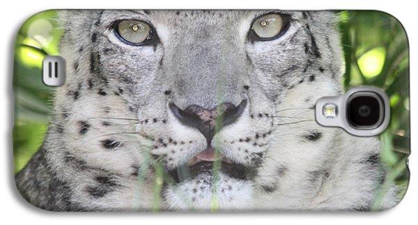 Green Galaxy S4 Cases - Snow Leopard Galaxy S4 Case by John Telfer