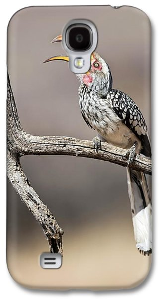 Southern Yellow-billed Hornbill Galaxy S4 Case by Tony Camacho