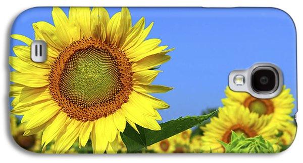 Sunflower Fields Galaxy S4 Cases - Sunflower field Galaxy S4 Case by Elena Elisseeva