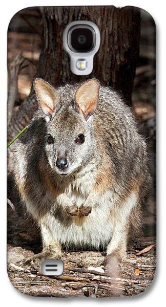 Tammar Wallaby (macropus Eugenii Galaxy S4 Case by Martin Zwick
