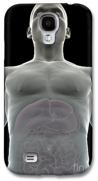 Internal Organs Galaxy S4 Cases - The Digestive System Galaxy S4 Case by Science Picture Co