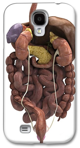 Internal Organs Galaxy S4 Cases - The Digestive System With Kidneys Galaxy S4 Case by Science Picture Co