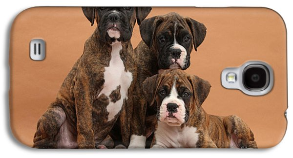 Boxer Galaxy S4 Cases - Three Boxer Puppies Galaxy S4 Case by Mark Taylor
