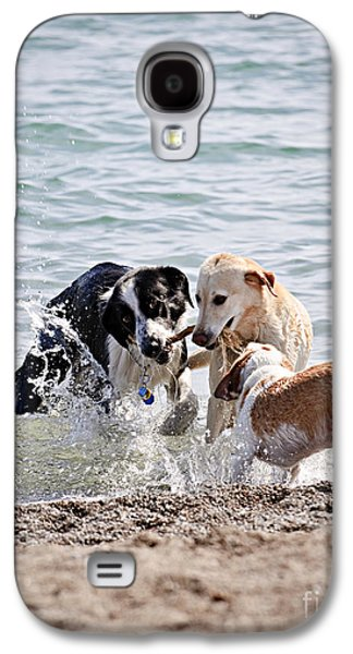 Doggy Galaxy S4 Cases - Three dogs playing on beach Galaxy S4 Case by Elena Elisseeva