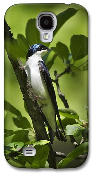 Swallow Galaxy S4 Cases - Tree Swallow Galaxy S4 Case by Christina Rollo