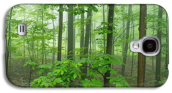 Hamburg Galaxy S4 Cases - Trees In A Forest, Hamburg, New York Galaxy S4 Case by Panoramic Images