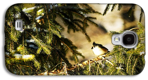 Tufted Titmouse Galaxy S4 Cases - Tufted Titmouse Galaxy S4 Case by Thomas R Fletcher