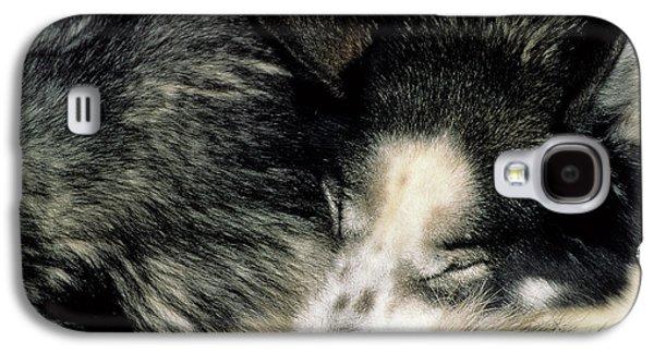 Usa, Alaska, Sled Dogs, Dog Sledding Galaxy S4 Case by Gerry Reynolds