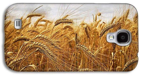 Crops Galaxy S4 Cases - Wheat Galaxy S4 Case by Elena Elisseeva