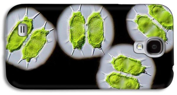 Xanthidium Antilopaeum Green Alga Galaxy S4 Case by Gerd Guenther