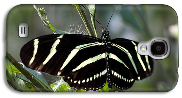Florida Flowers Galaxy S4 Cases - Zebra longwing Butterfly-4 Galaxy S4 Case by Rudy Umans