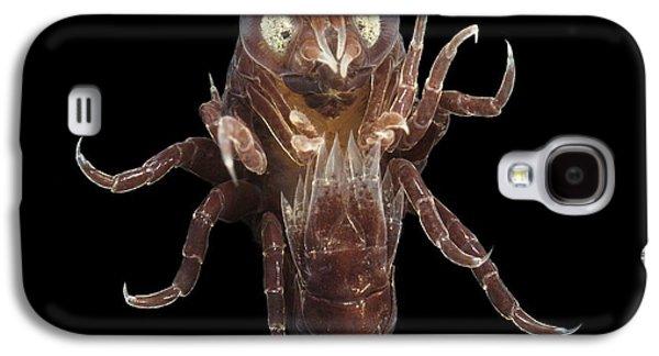 Plankton Galaxy S4 Cases - Amphipod Crustacean Galaxy S4 Case by Alexander Semenov