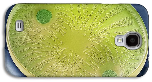 Diatom Galaxy S4 Case by Steve Gschmeissner