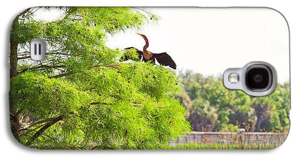 Anhinga Anhinga Anhinga On A Tree Galaxy S4 Case by Panoramic Images