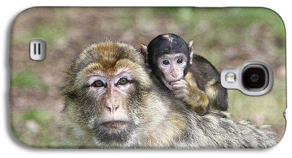 Barbary Macaques Galaxy S4 Case by M. Watson